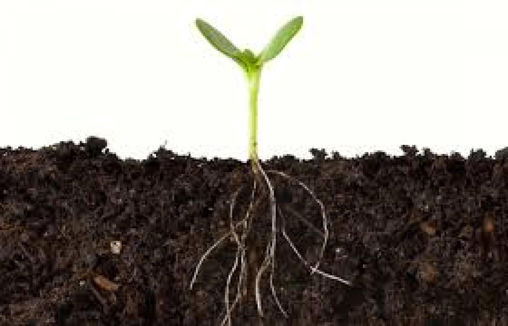 Relatie tussen bodemorganische stof en nitraatuitspoeling
