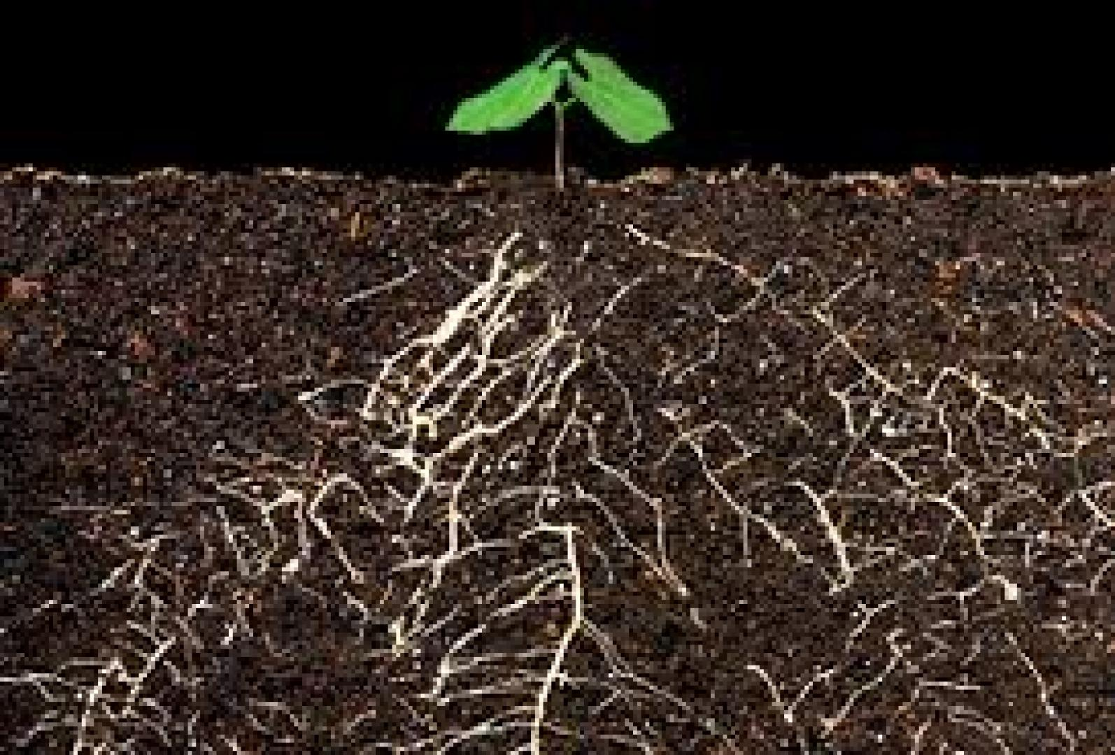 Organische stof en gewasopbrengsten, een nieuwe hypothese?