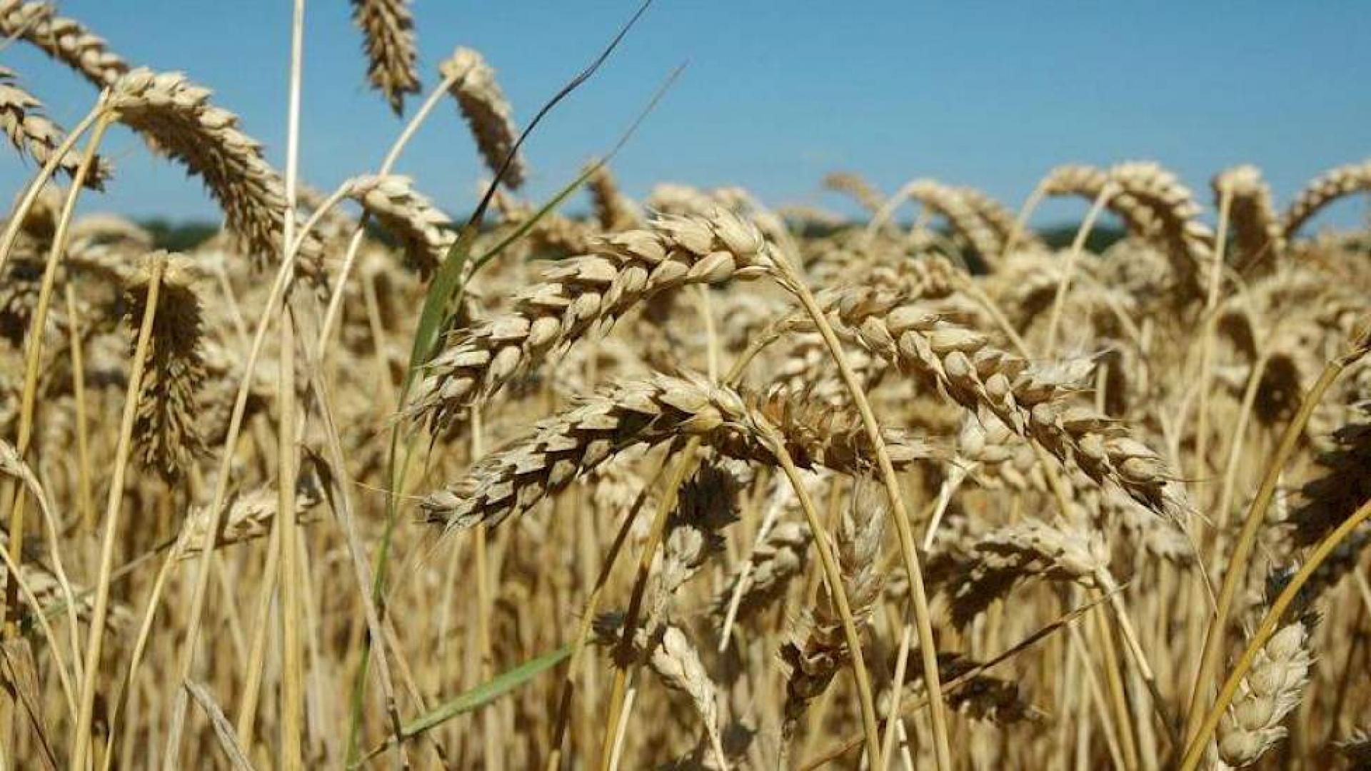 Onderzoek LNV naar vertrouwen van boeren in kringlooplandbouw