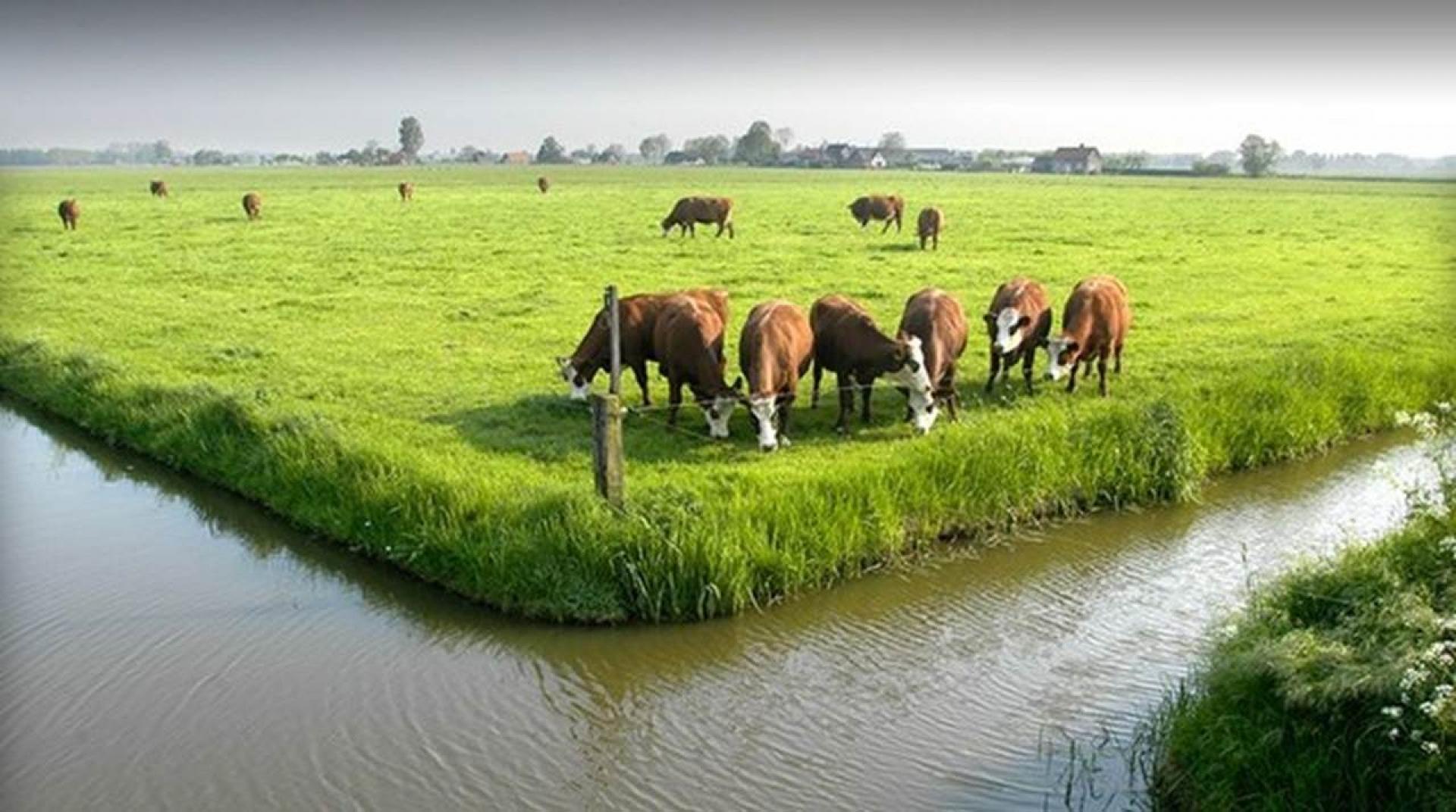 Nitraatgehalte wordt bepaald door grondsoort en gewas, meer dan door de bemesting